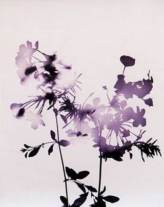 James-welling_flowers